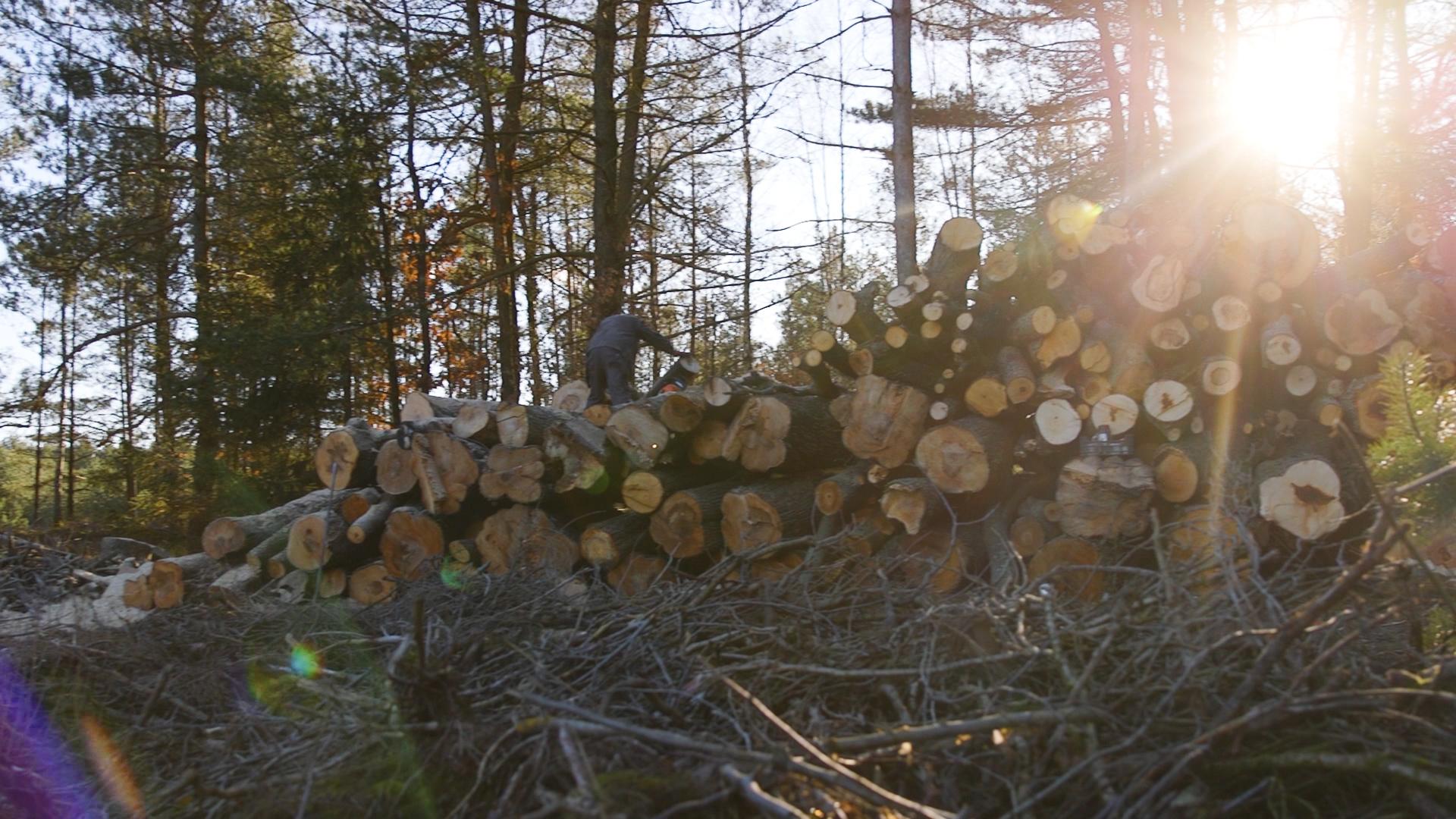 Do mieszkańców trafi drewno pozyskane z wycinki drzew