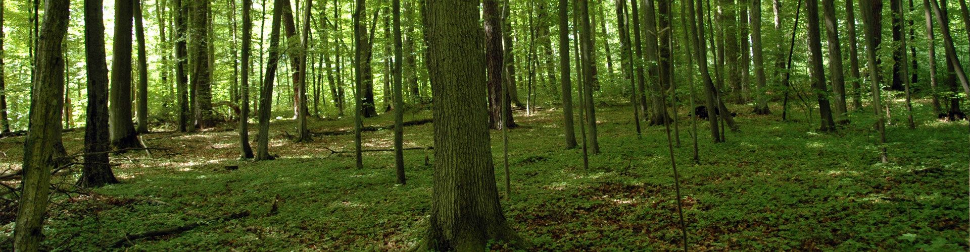 Obwieszczenie Regionalnego Dyrektora Ochrony Środowiska w Gdańsku